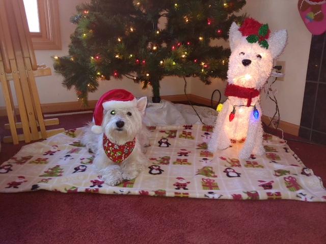 Chloe's Christmas Buddy